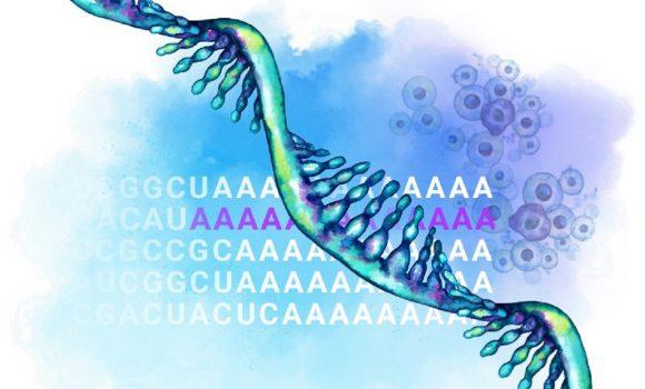 Advanta RNA-Seq XT NGS Library Prep Kits