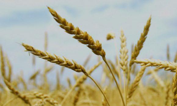 Agricultural Genomics Solutions